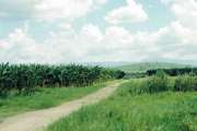 lucwulli_Cuba_1999_080