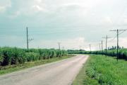 lucwulli_Cuba_1999_082