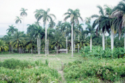 lucwulli_Cuba_1999_085