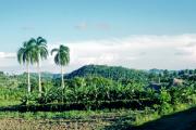 lucwulli_Cuba_1999_150