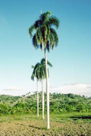 lucwulli_Cuba_1999_151