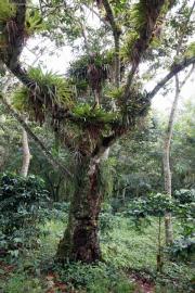 Sierra del Escambray, Parque Guanayara