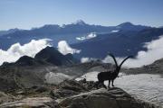 Cab du Trient --> Champex | Skulptur vor der Cab. d'Orny; Glacier d'Orny; Grand Combin & Mont Vélan