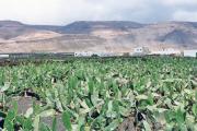 lucwulli_Lanzarote_1997_009