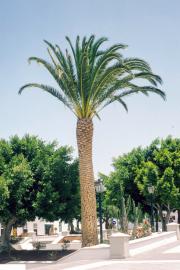 lucwulli_Lanzarote_1997_036