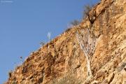 Köcherbäume, Feigen und Euphorbien in den Naukluft-Bergen