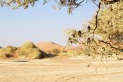 Durstige Vögel in den Dünen der Namib bei Sossusvlei