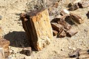 Versteinerter Baumstamm unweit Twyfelfontein.