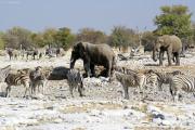 Elefanten, Steppenzebras und Spiessböcke an der Ombika Wasserstelle. Etosha National Park.