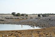 Auftritt einer Elefantenherde bei der Okaukuejo Wasserstelle. Steppenzebras und Springböcke weichen. Etosha National Park.