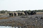 Elefantenherde erreicht die Okaukuejo Wasserstelle. Etosha National Park