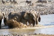 Elefantenherde beim Bad in der Okaukuejo Wasserstelle. Zebras suchen dabei das weite. Etosha National Park