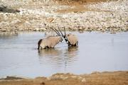 Zwei Spiessböcke in der Okaukuejo Wasserstelle. Etosha National Park.