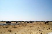 Elefantenherde mit Jungtieren an einer Wasserstelle im Osten des Etosha Nationalparks