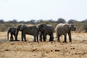 Elefanten an einer Wasserstelle im Osten des Etosha Nationalparks