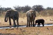 Elefantenbulle, -kuh und -kalb einer Wasserstelle im Osten des Etosha Nationalparks
