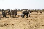 Elefantenherde, Oryxe, Kudu und Giraffe versammeln sich um eine Wasserstelle. Etosha National Park