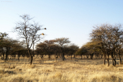 Landschaft bei der Otjibamba Lodge