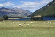 Zwischen Glenorchy und Paradise