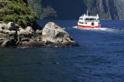 Milford Sound. Seebaeren beim Sonnenbad