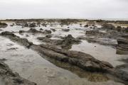 The Catlins. Curio Bay. Petrified Forest - versteinerter Wald