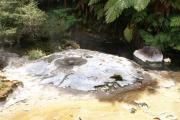 Waimangu Thermal Valley bei Rotorua