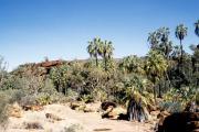 Finke Gorge National Park, Palm Valley