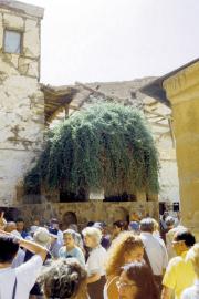 Katharinenkloster (Μονὴ τῆς Ἁγίας Αἰκατερίνης, دير سانت كاترين)