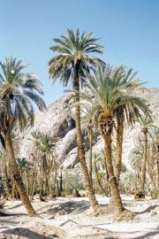 lucwulli_Sinai_2000_052