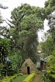 Traditionelle Chagga-Hütte. Capricorn Hotel, Marangu