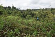 Terrassierte Äcker der Chagga bei Marangu