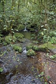 Im Urwald des Kilimanjaro-NP. Marangu-Route, Tag 1