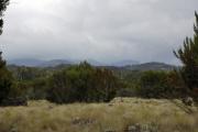 Erikasträucher bei den Mandarahütten. Marangu-Route, Tag 1