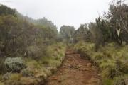 Kilimanjaro NP. Marangu-Route, Tag 1