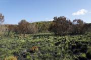 Spuren eines grössern Flächenbrandes. Kilimanjaro NP. Marangu-Route, Tag 2