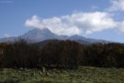 Verbrannte Büsche. Darüber der Mawenzi (5148 m). Kilimanjaro NP. Marangu-Route, Tag 2