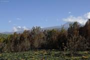 Erster freier Blick auf den Kibo (l) und den Mawenzi (r). Kilimanjaro NP. Marangu-Route, Tag 2