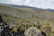 Bei den Horombo-Hütten. Kilimanjaro NP. Marangu-Route, Extra-Tag 3