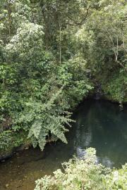 Kilimanjaro NP. Marangu-Route, Tag 6