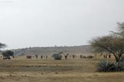Massai. Bei Arusha