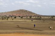 Massai unterwegs mit Esel. Bei Arusha