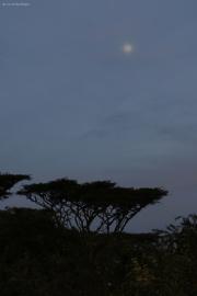 Vollmond über dem Camp. Ngorongoro