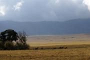 Zebras im Ngorongoro-Krater. Ngorongoro Conservation Area