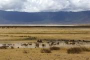 Massai mit Ziegenherde im Ngorongoro-Krater. Ngorongoro Conservation Area
