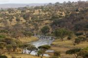 Herden von Büffel und Gnus im Tarangire-Fluss. Tarangire Safari Lodge, Tarangire NP