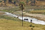 Elefanten im Tarangire-Fluss. Tarangire NP