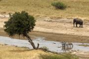 Elefant und Zebras am Tarangire-Fluss. Tarangire Safari Lodge. Tarangire NP