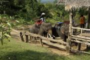 Elefanten (Elephas maximus indicus), bereit für einen Ritt bei Nam Tok, Kanchanaburi