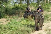 Elefanten (Elephas maximus indicus) bei Nam Tok, Kanchanaburi