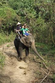 Elefant (Elephas maximus indicus), bei Nam Tok, Kanchanaburi